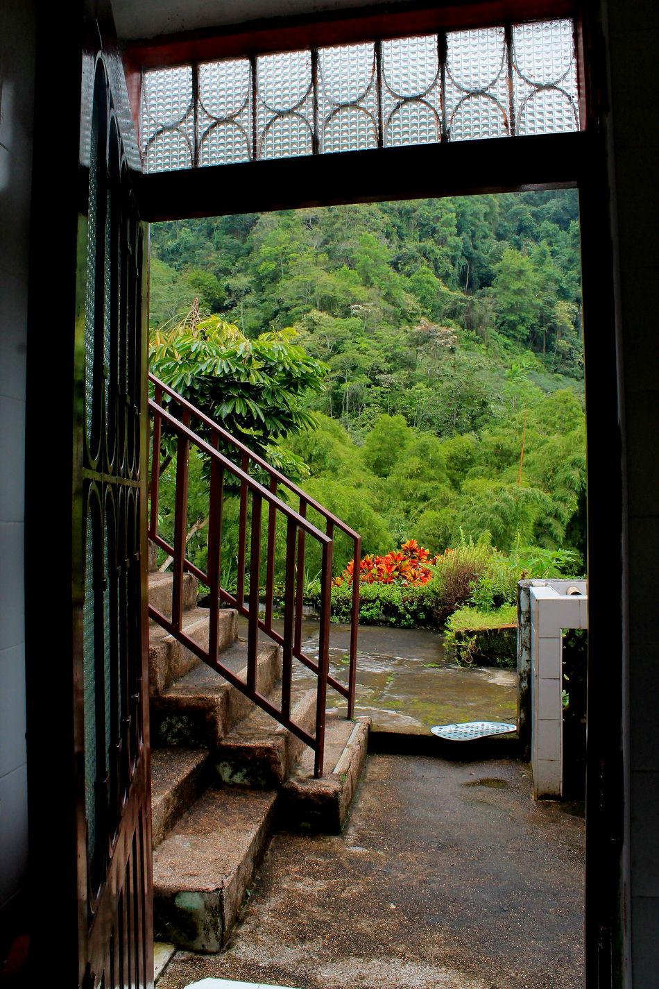 Adentro Architecture Bienvenidos Built Structure Day Entrada Entrar Indoors  Mundo Nature No People Railing S Selva Tree Vida