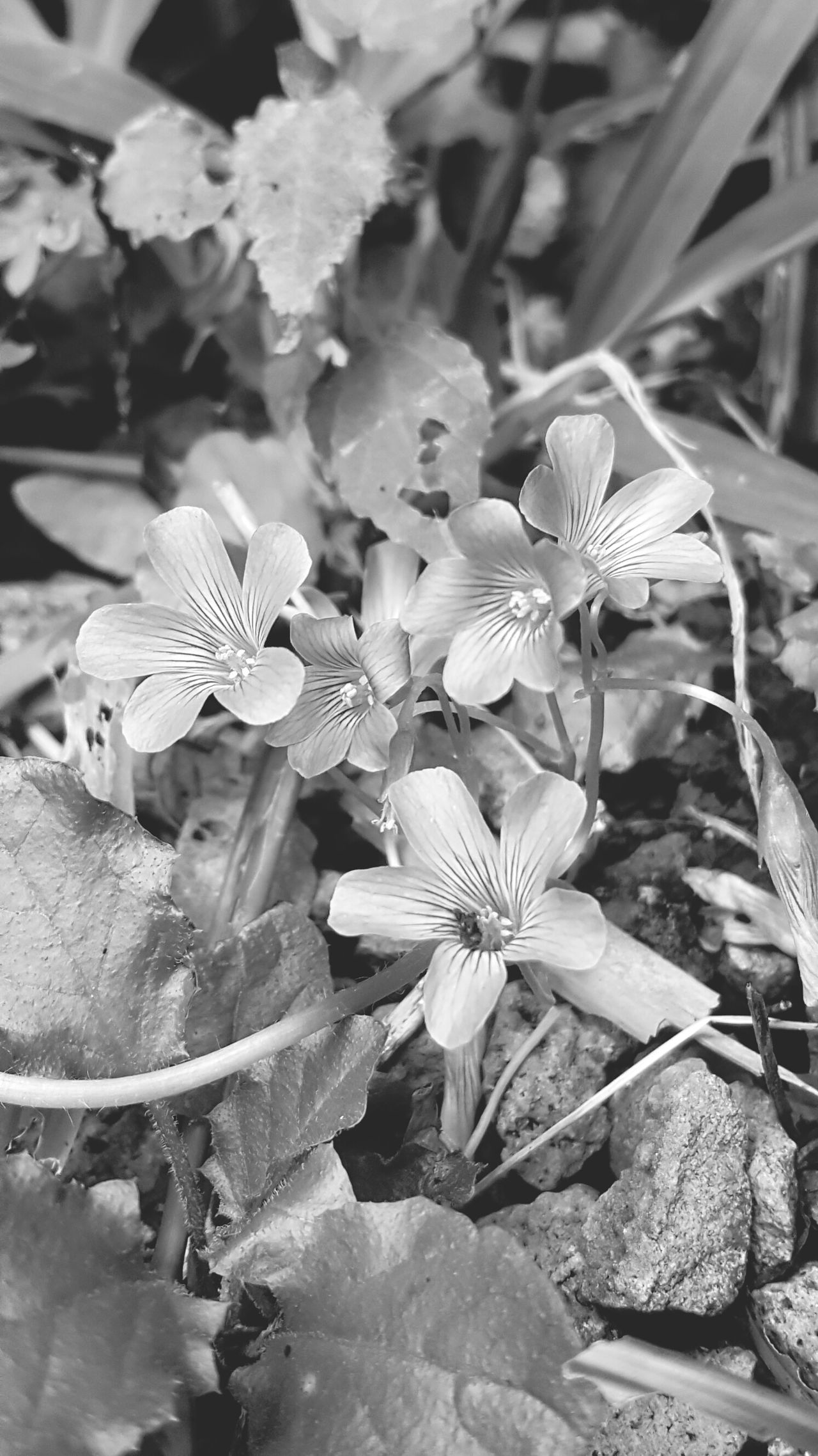 Flower Beauty In Nature Black And White Photography Outdoors Kauai Hawaii