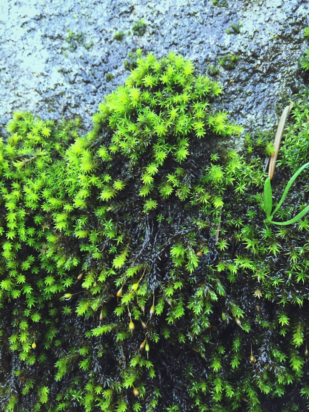 Textured  Plant Growth Nature Outdoors Beauty In Nature Close-up Green Color Abstractions Moss & Lichen Natural Condition Power In Nature Backgrounds Scenic Views Perspective Shapes In Nature  Abstract Nature Layers And Textures Weathered Rock Formation