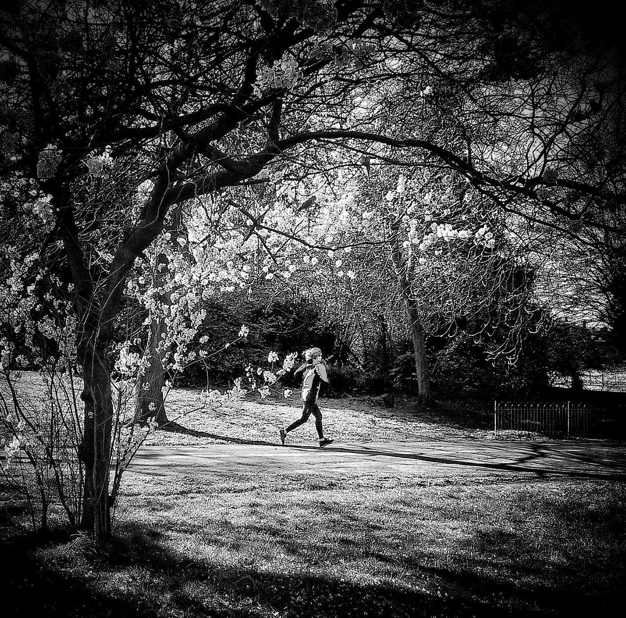 """""""Run, run.."""" Real People Tree Sunlight Outdoors Nature One Person Day Full Length Women Men Sky People Monochrome Photograhy London Lifestyle Streetphoto_color Lifestyles Blackandwhite Photography Blackandwhite Shootermag_uk Black And White Sport Shootermag"""