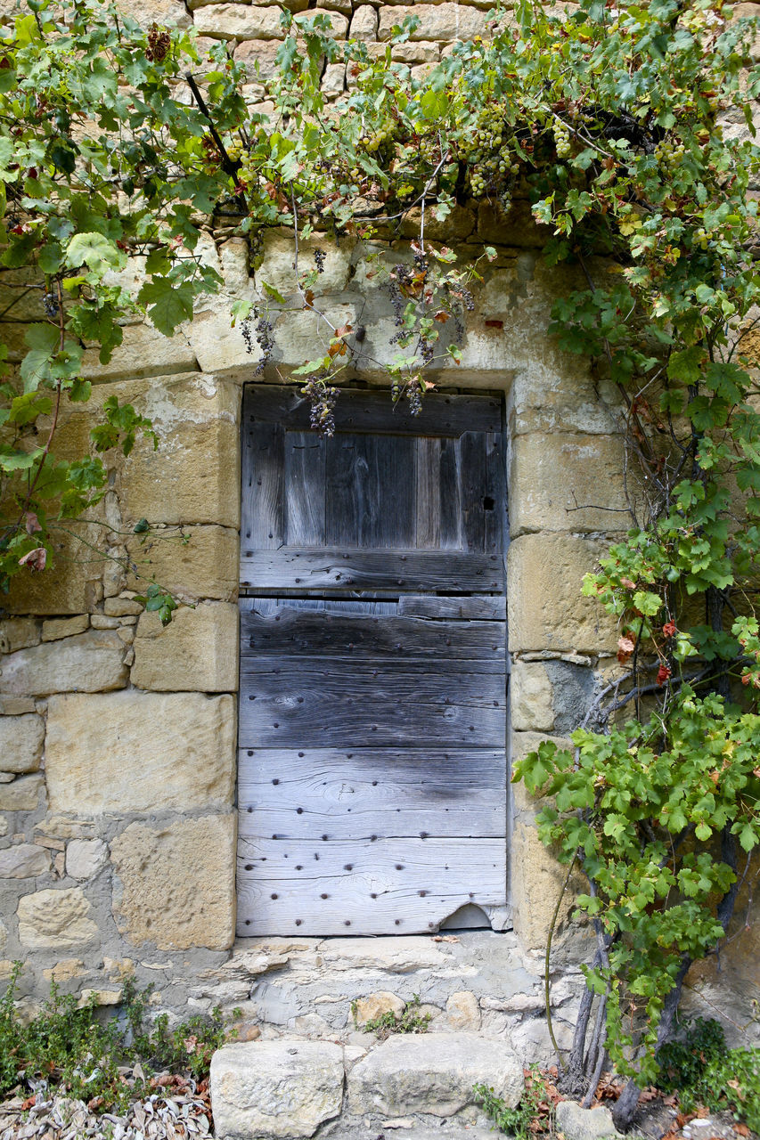 door, entrance, plant, growth, no people, architecture, doorway, outdoors, nature, day, building exterior