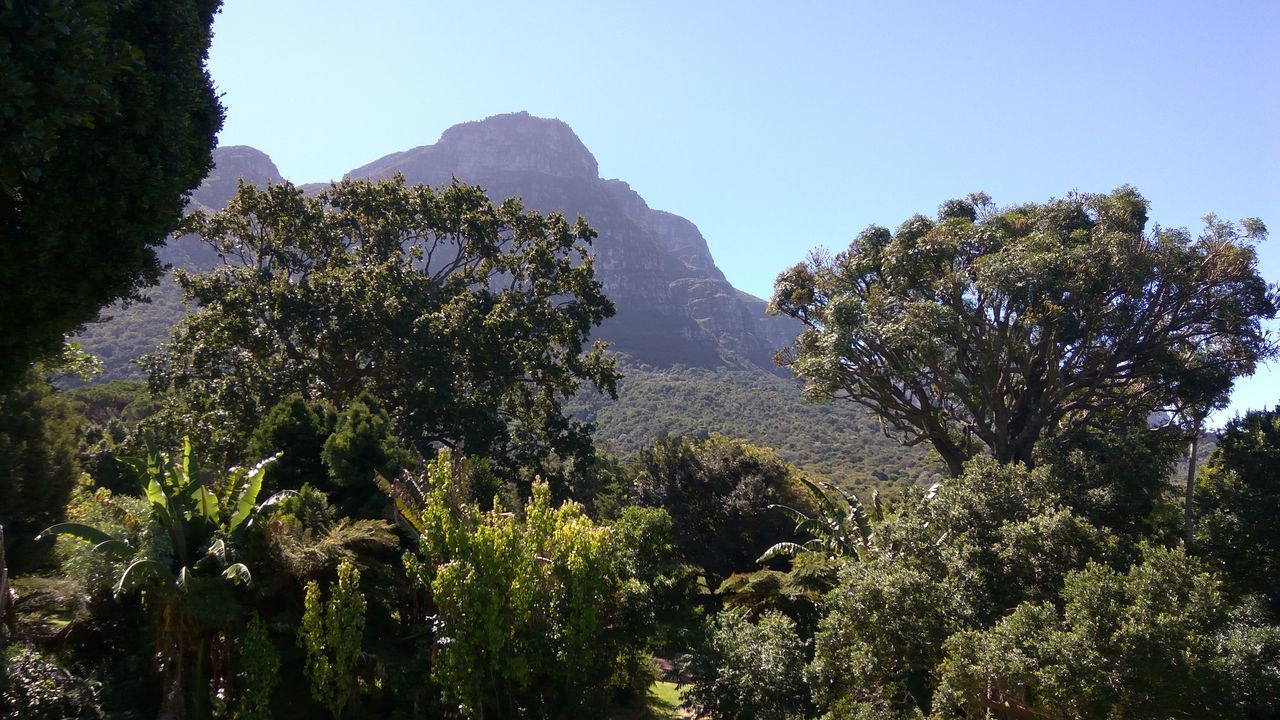 Tree Growth Nature Low Angle View Beauty In Nature Sky No People Plant Scenics Outdoors Close-up Day Tree Mountain Rock Green Color Beauty In Nature Growth Nature Cape Town, South Africa EyeEm Nature Lover Cloud - Sky Mountain Range Cape Town Beauty Tranquil Scene