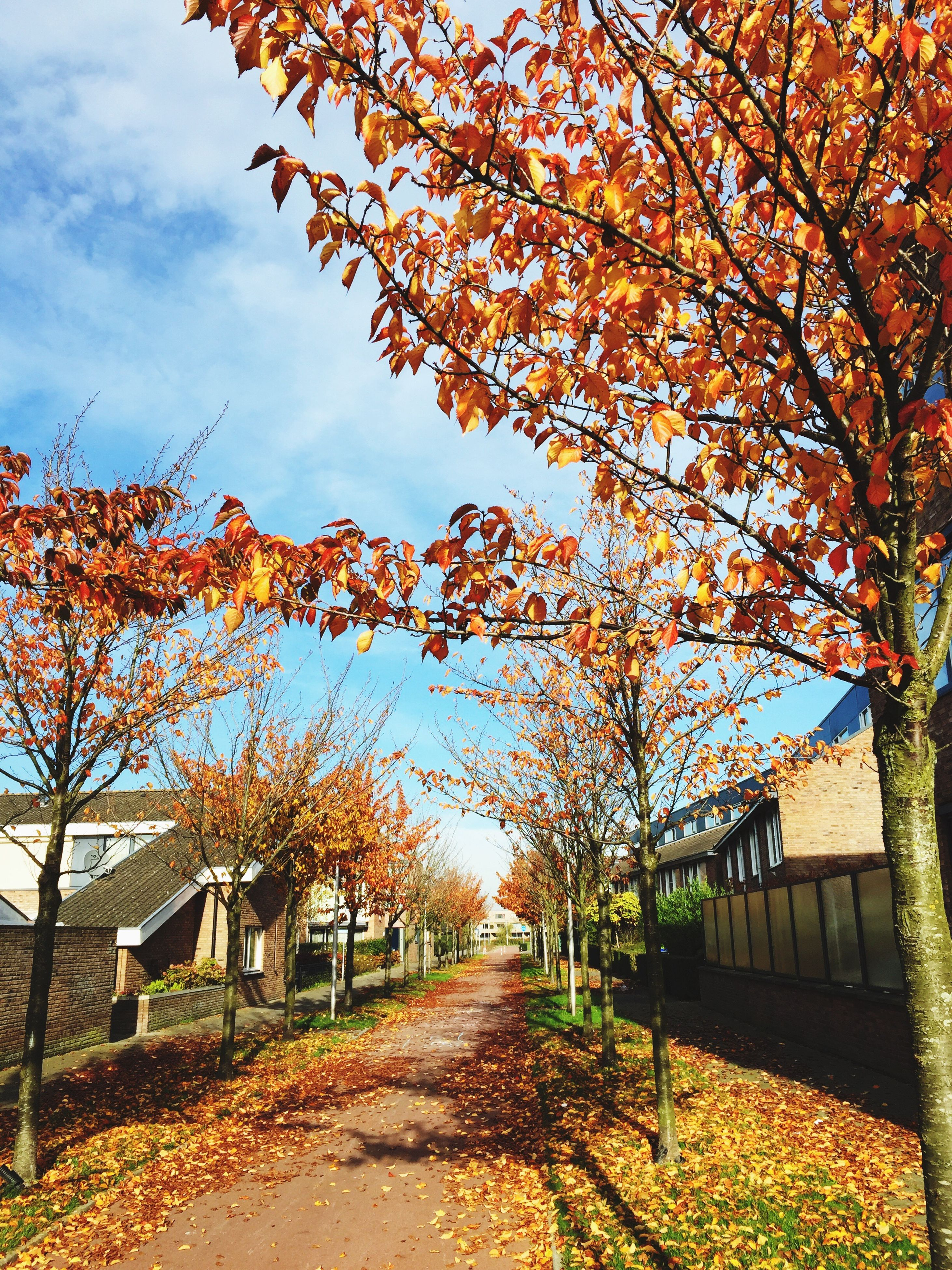 tree, autumn, change, built structure, architecture, building exterior, the way forward, sky, season, branch, footpath, house, growth, nature, orange color, beauty in nature, sunlight, tranquility, outdoors, leaf