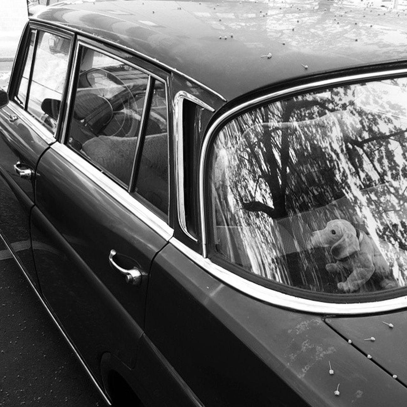Benz mit Hund Altekarrenbattle Mercedes Mercedesbenz Berlin Moabit