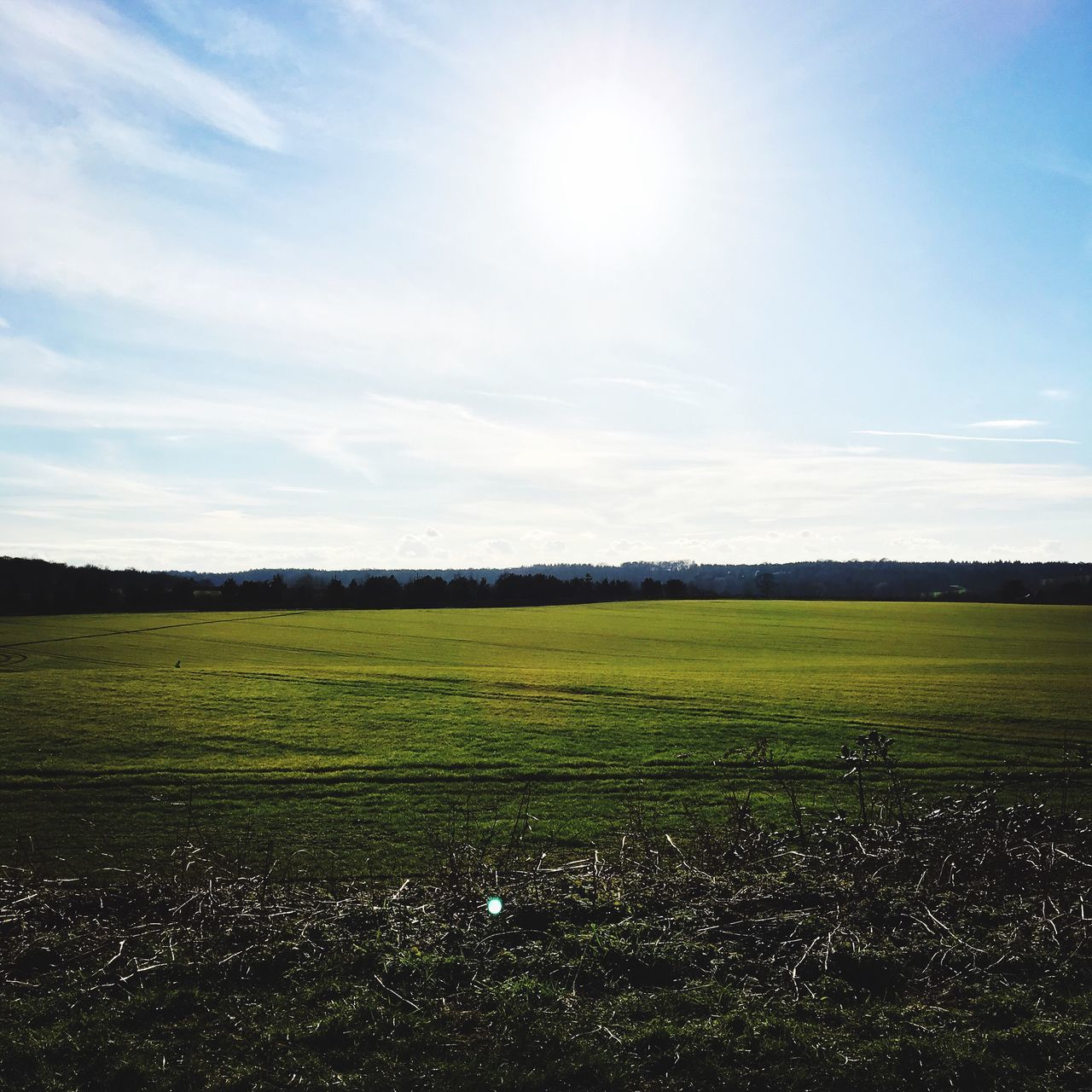 landscape, field, sky, nature, agriculture, tranquil scene, tranquility, sun, grass, sunlight, no people, beauty in nature, scenics, growth, scenery, outdoors, day, blue sky