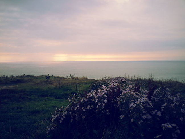 Beach Beauty In Nature Bycicle Flower Growth Horizon Over Water Nature No People Outdoors Plant Scenics Sea Sky Sunset Water First Eyeem Photo