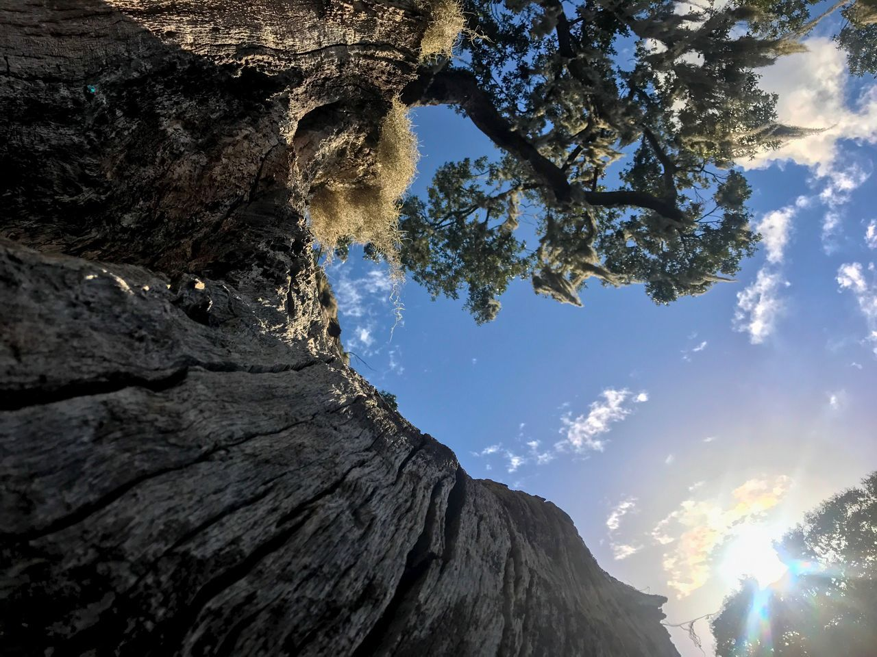 tree, nature, low angle view, beauty in nature, tree trunk, sky, mountain, sunlight, tranquility, day, no people, outdoors, scenics, branch