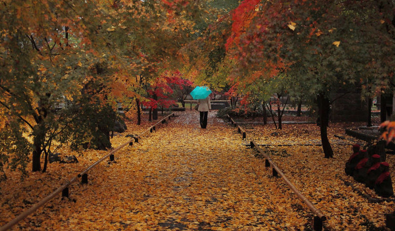 Alone EyEmNewHere Rain Autumn Beauty In Nature Change Leaf Nature Outdoors Real People Scenery Tree Walking
