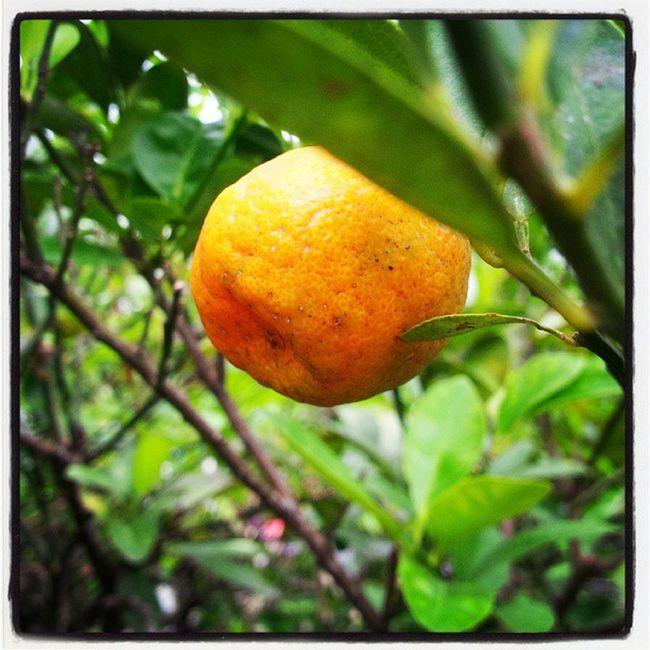 I'm orange... Blackberryq10