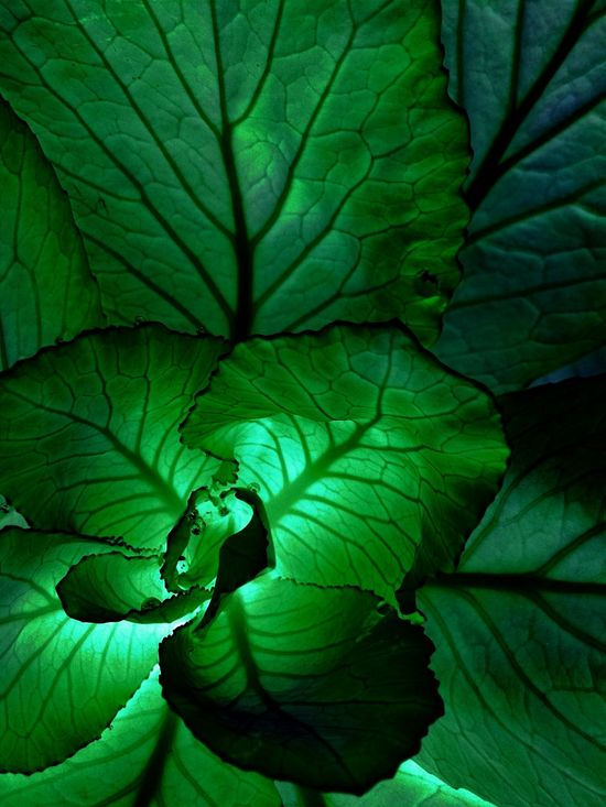 Check This Out Nature Photography InnerLife Green Color EyeEm Gallery Freshness Cool Eye4photography  InnerBeauty Insideofplant Luminous