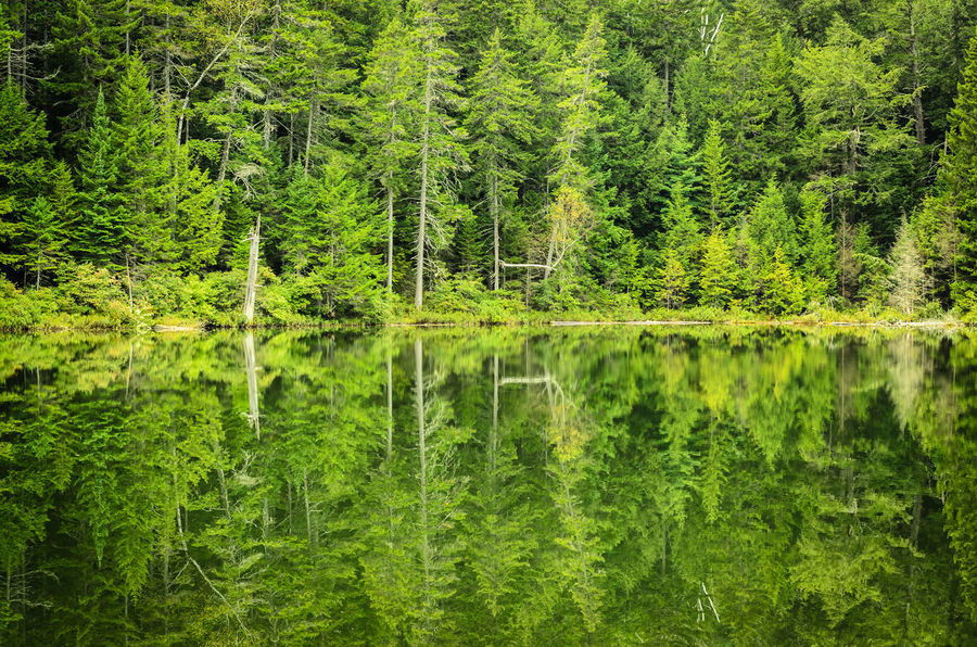 Forest reflection in New Hampshire, USA. Beauty In Nature Forest Green Horizontal Symmetry Lake Landscape Lush Foliage Nature New Hampshire New Hampshire Nat Non-urban Scene Outdoors Outside Philipp Dase Relaxing Moments Remote Symmetry Tranquil Scene Tranquility Travel Travel Photography Tree USA USAtrip