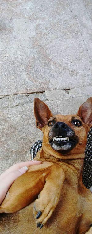 Cacau Dogs Mybackyard Cellphonephotography Motog2