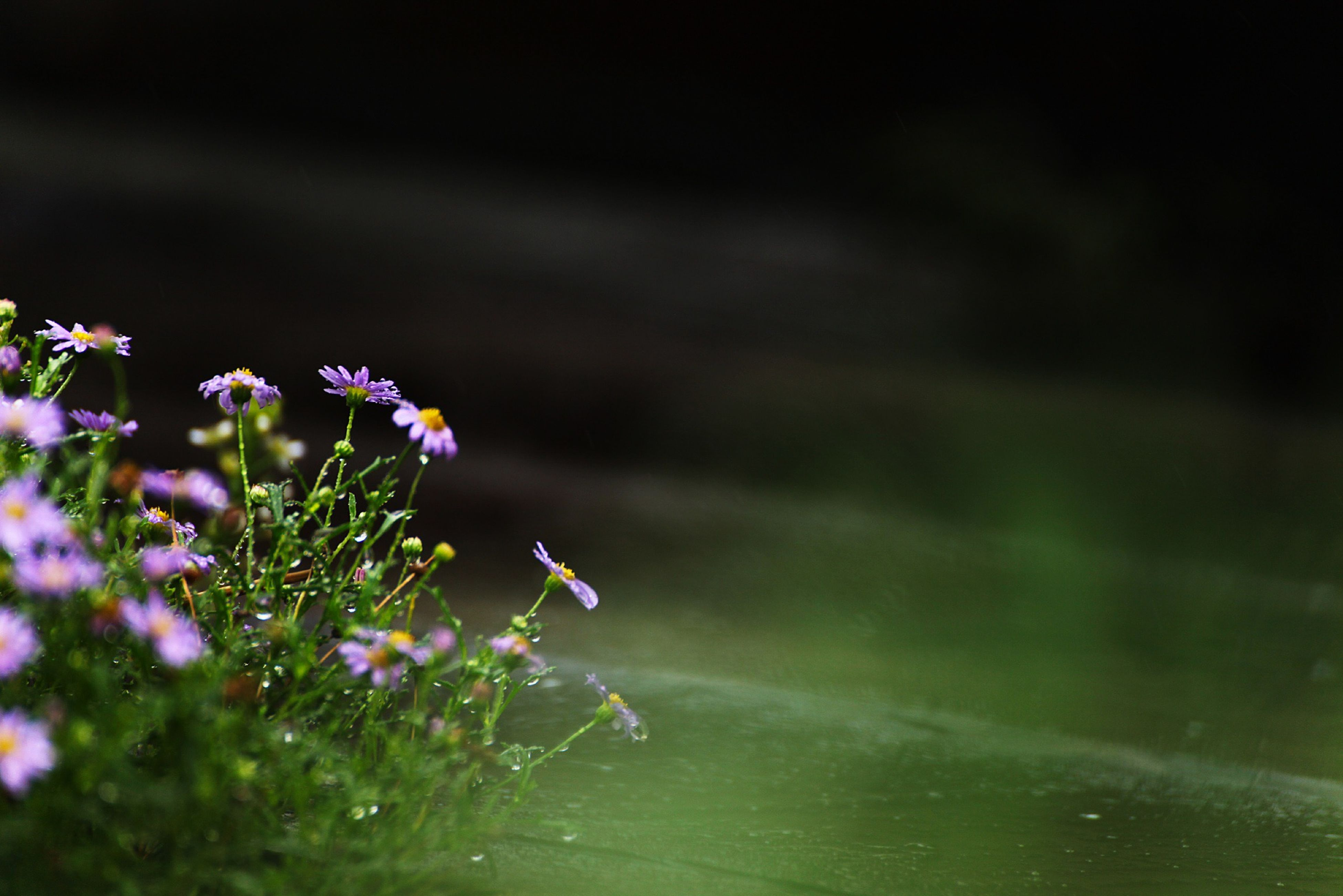 flower, fragility, freshness, growth, beauty in nature, petal, focus on foreground, plant, close-up, nature, blooming, flower head, selective focus, stem, purple, in bloom, outdoors, wildflower, day, botany