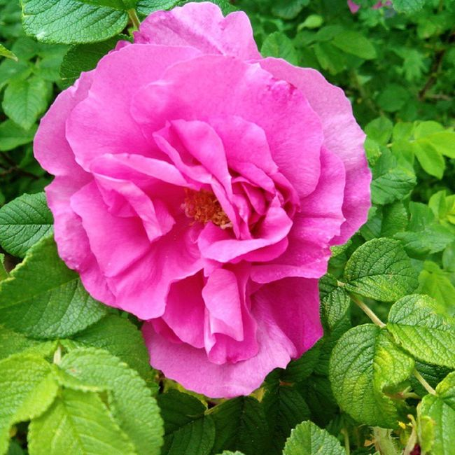 #photo #foto #2013 #фото #фотография #лето #summer #flower #flowers #nature #природа