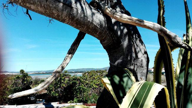 Taking Photos Nature Beauty Wood Cactus Woodensnake Armonaisland