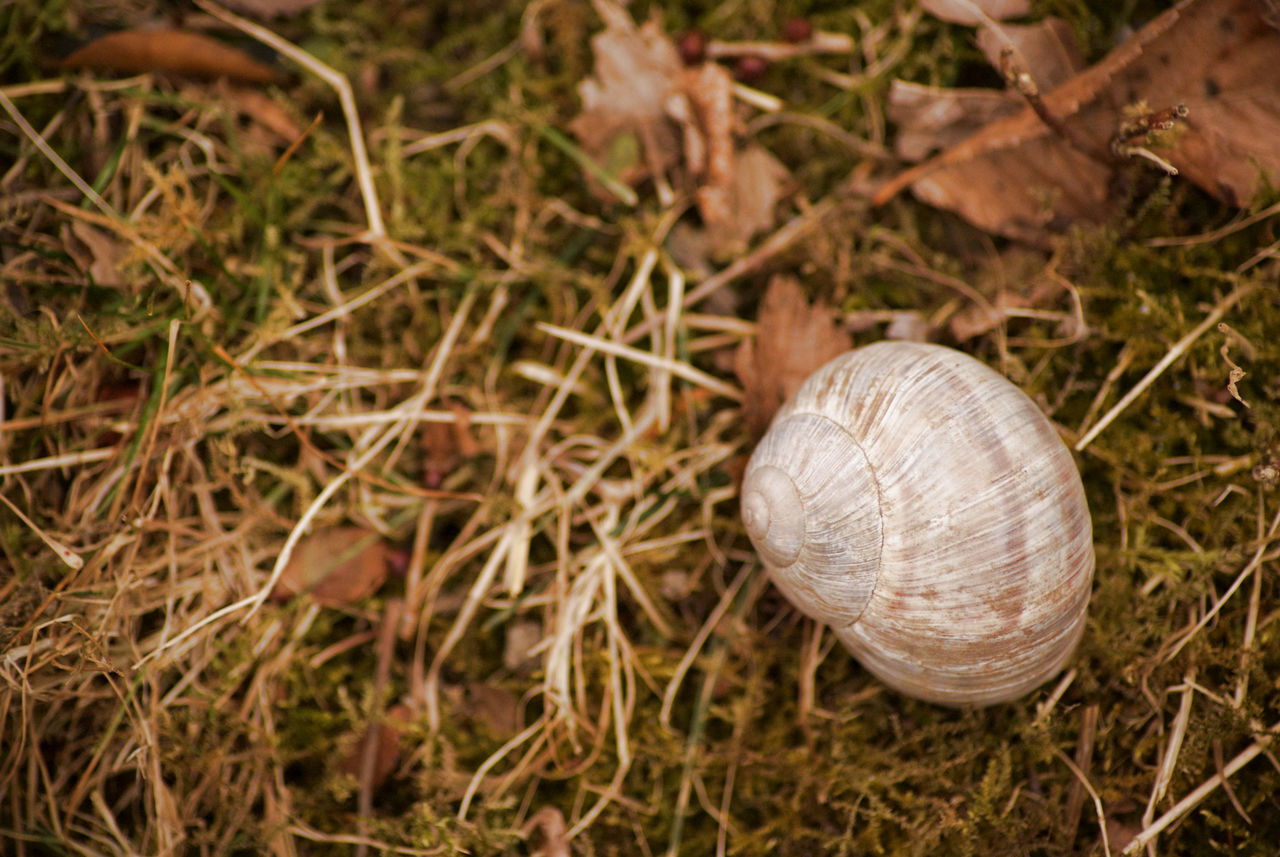 Escargot on the riverside. Animal Themes Animals In The Wild Autumn Colors Autumn Leaves Beauty In Nature Close-up Day Escargot Field Gastropod Grass Nature No People One Animal Outdoors Simplicity EyeEm Nature Lover EyeEm Gallery