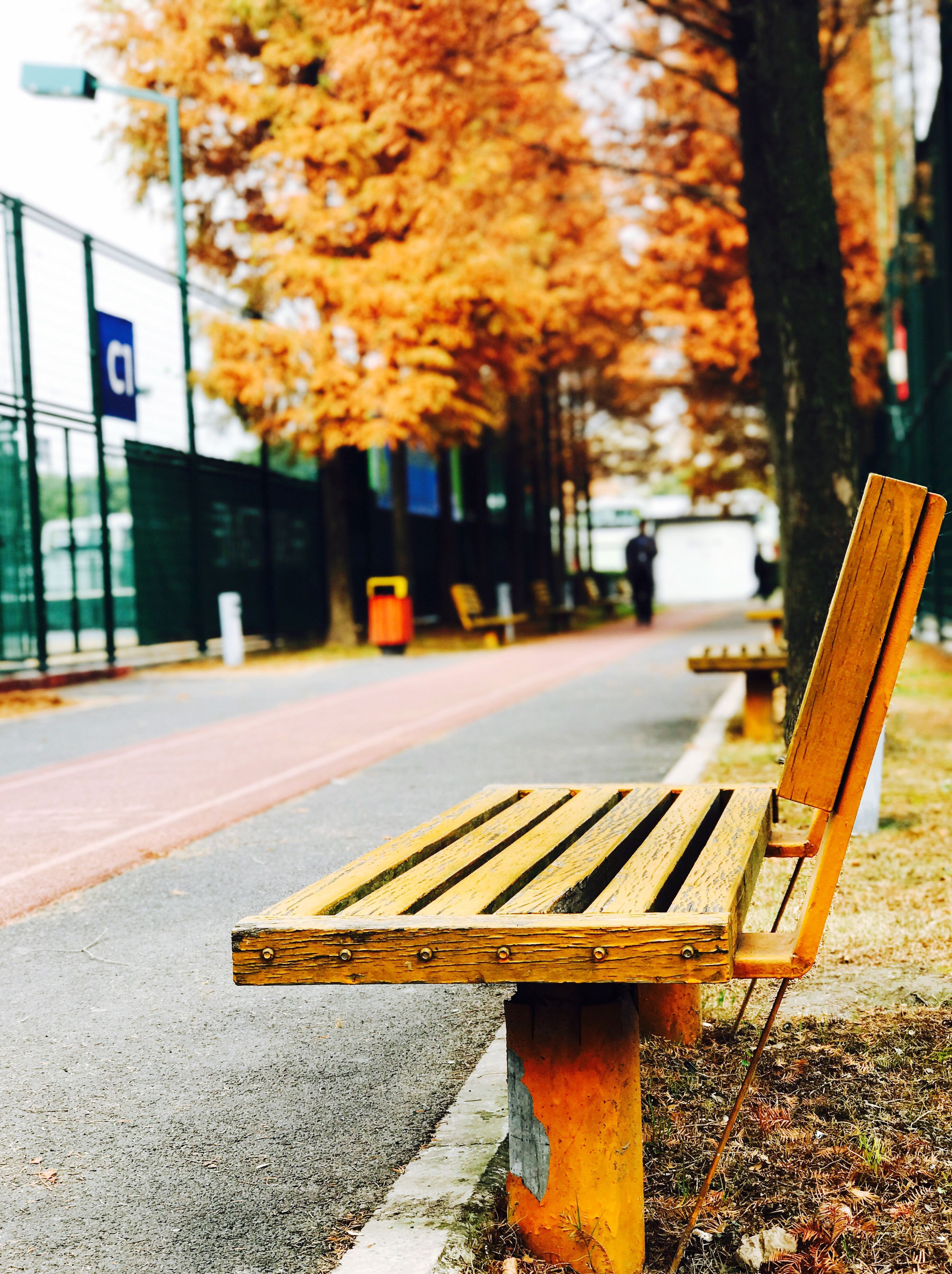 bench, outdoors, day, autumn, no people, nature, tree, architecture