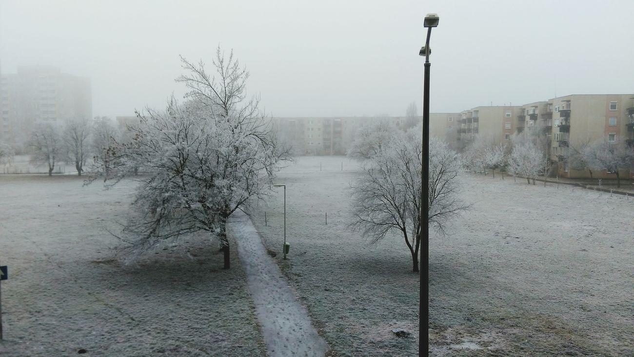 Winter Snow Tree Snow Trees Snow❄⛄ Merry Christmas🎄🎅🏻 Three Weeks Ago
