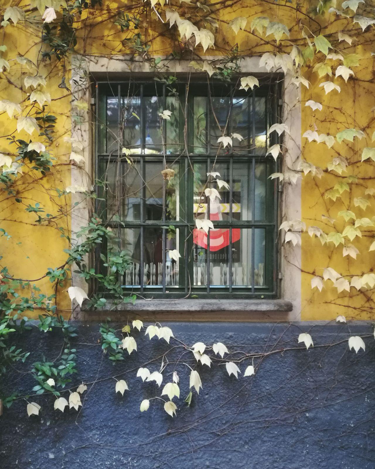 Carla Sozzani Milano Window Outdoors Plant Art Gallery Beutiful  Nature Collection