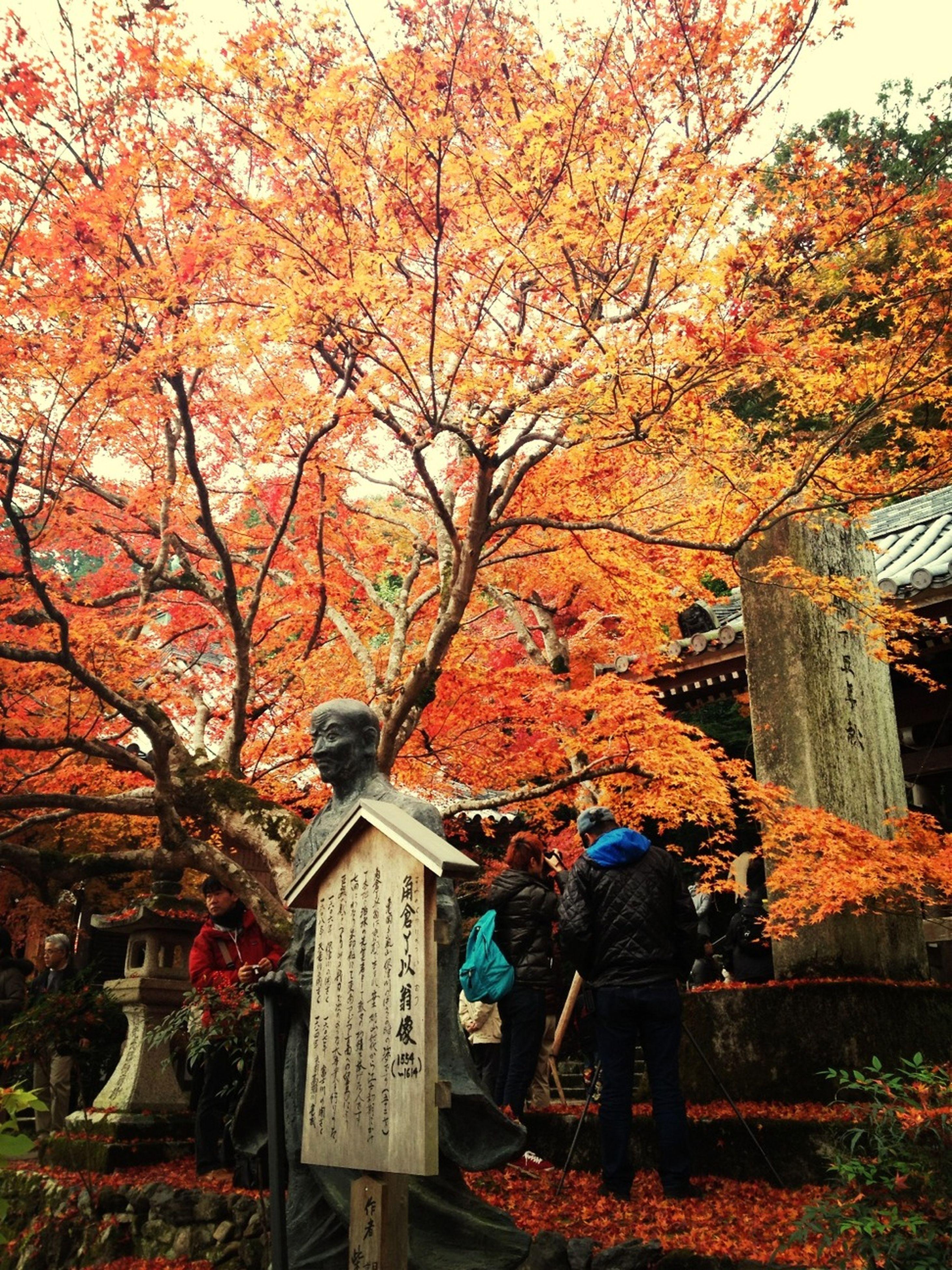 autumn, tree, change, season, lifestyles, orange color, men, branch, growth, built structure, leisure activity, nature, person, building exterior, leaf, flower, architecture, rear view