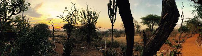 African savannah Hello World