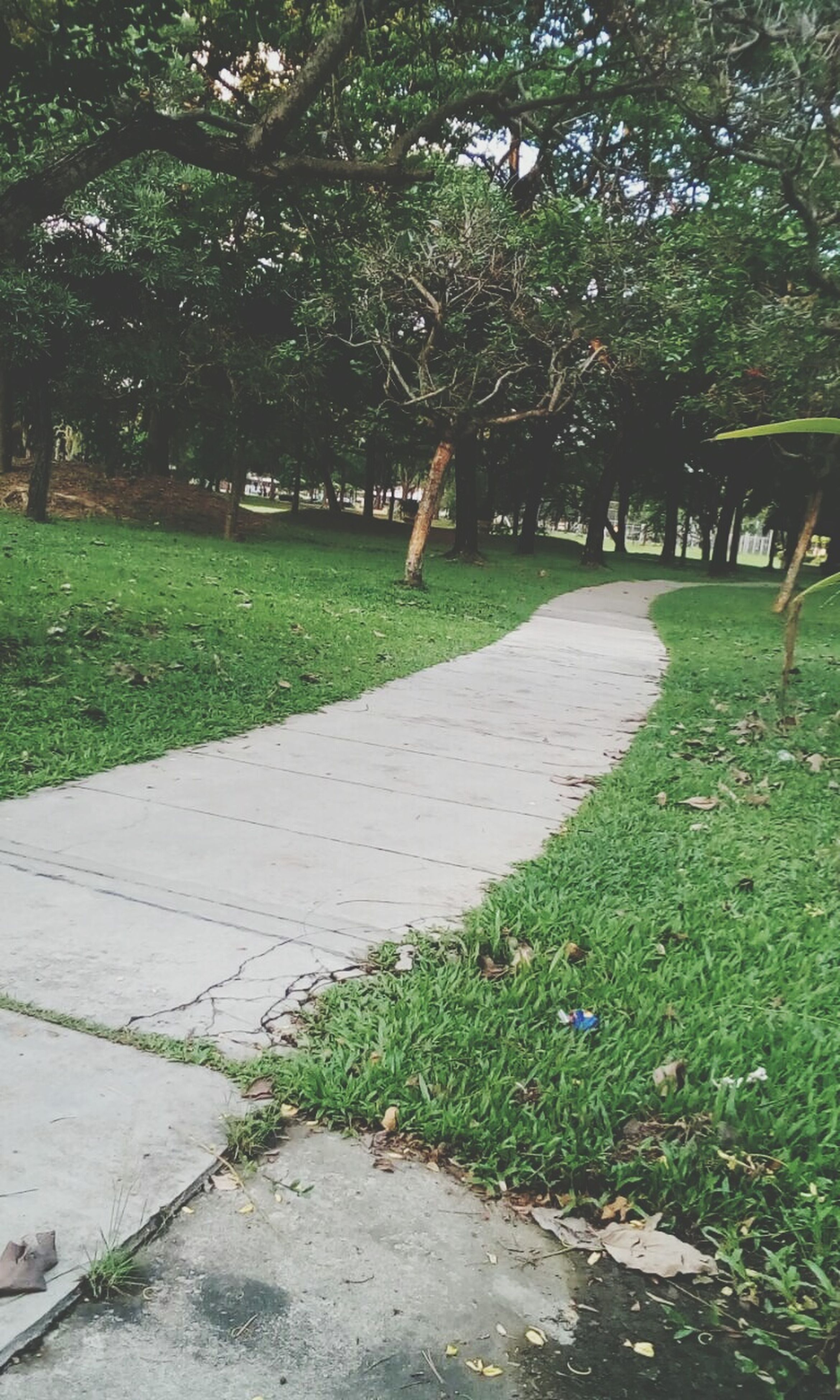 tree, green color, grass, growth, footpath, the way forward, park - man made space, nature, tranquility, shadow, sunlight, walkway, day, beauty in nature, park, outdoors, plant, tree trunk, no people, pathway