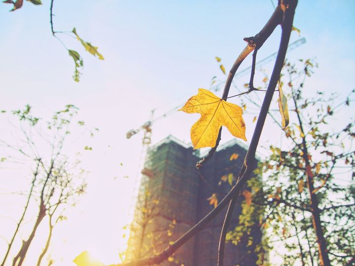 Leaf Autumn Low Angle View Change Day Branch Outdoors Nature No People Tree Sky Growth Yellow Beauty In Nature Close-up Freshness