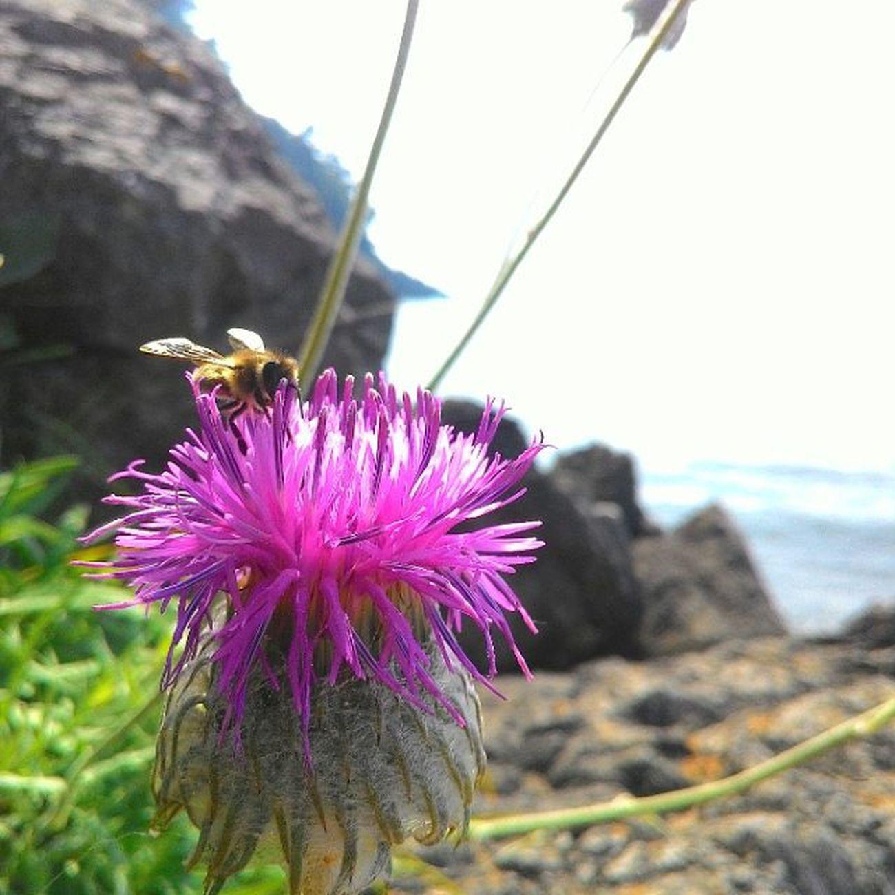 Inkum Deniz Gunes Arı bee çiçek life purple