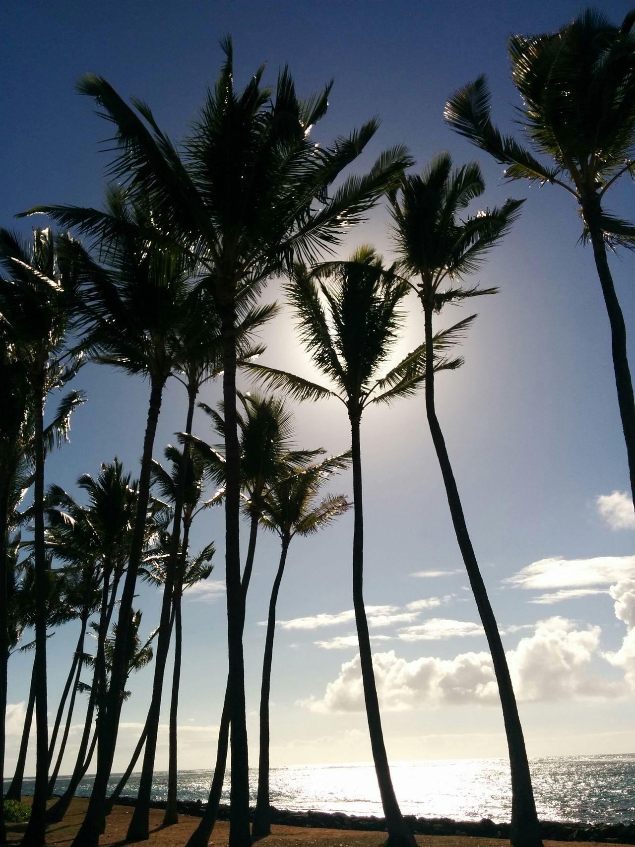 Kappa Beach Park Kauai Hawaii Palm Trees Ocean