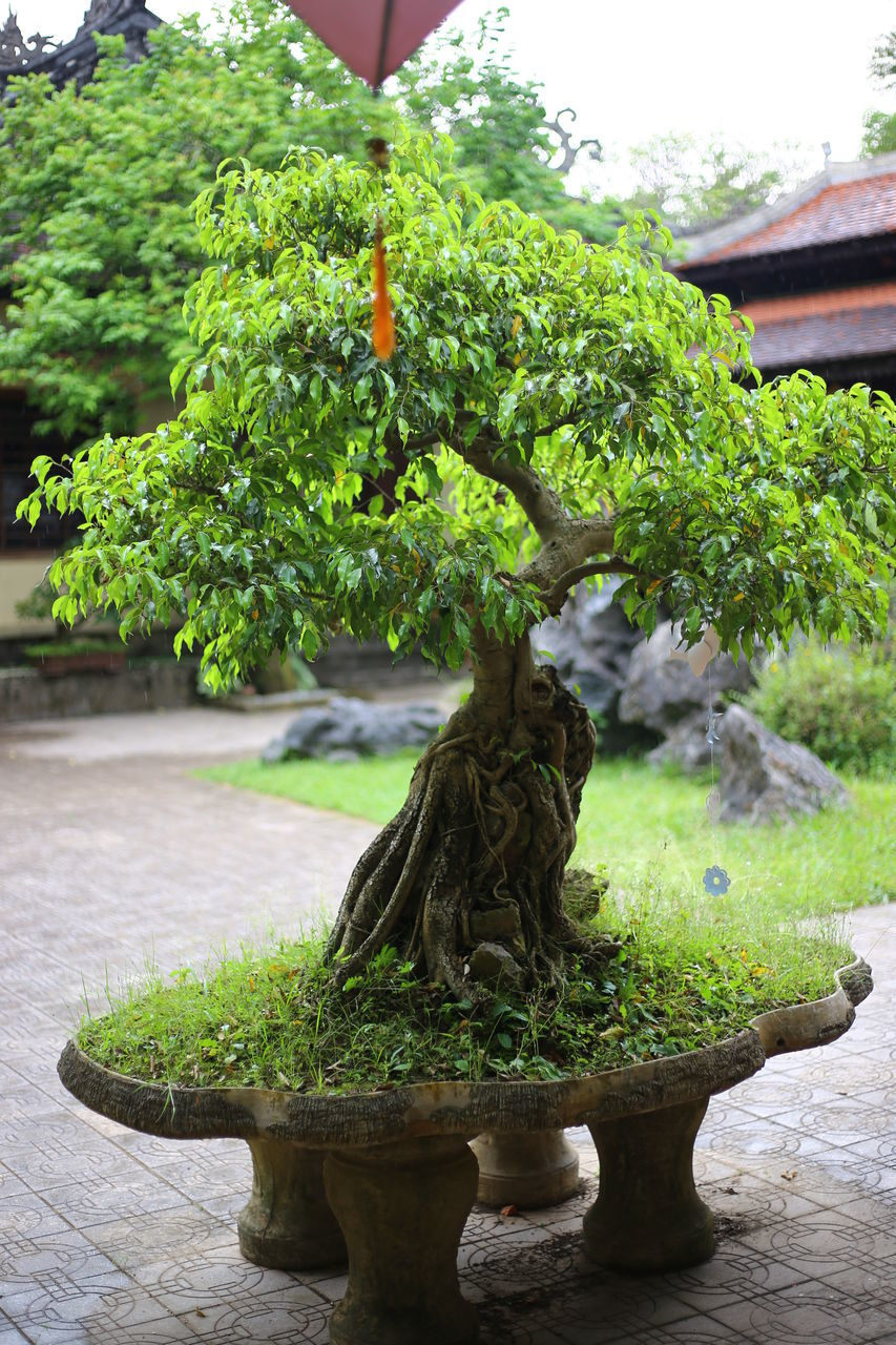 statue, sculpture, fountain, growth, water, bonsai tree, green color, plant, no people, nature, day, outdoors, tree, close-up