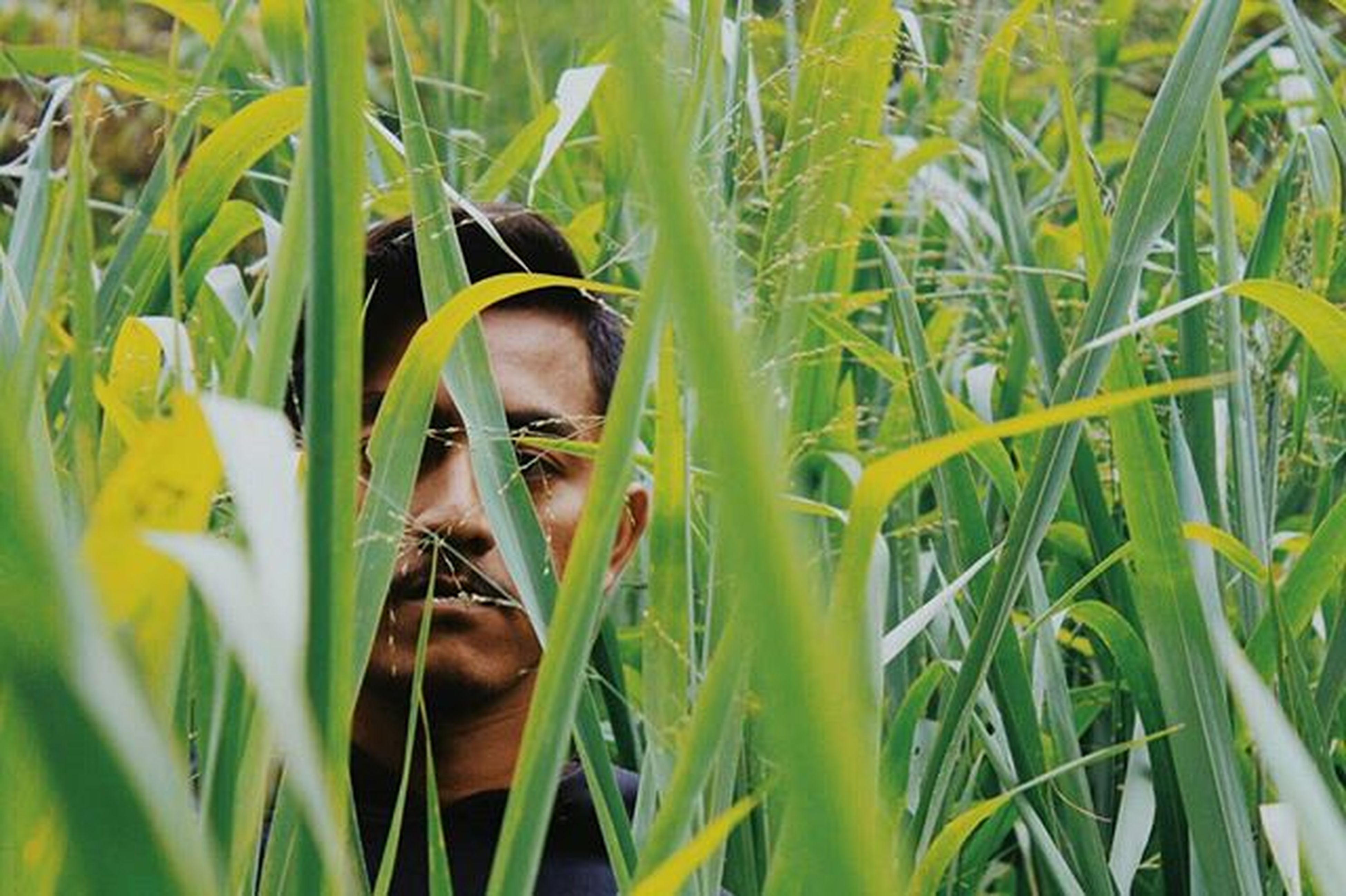 grass, growth, plant, field, green color, close-up, nature, focus on foreground, grassy, leaf, outdoors, selective focus, day, sunlight, beauty in nature, green, headshot, freshness