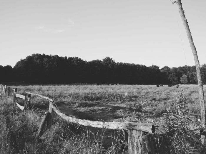 Black n' White Photography of Scottish Highland Cattle Ranch OnePlusOne📱