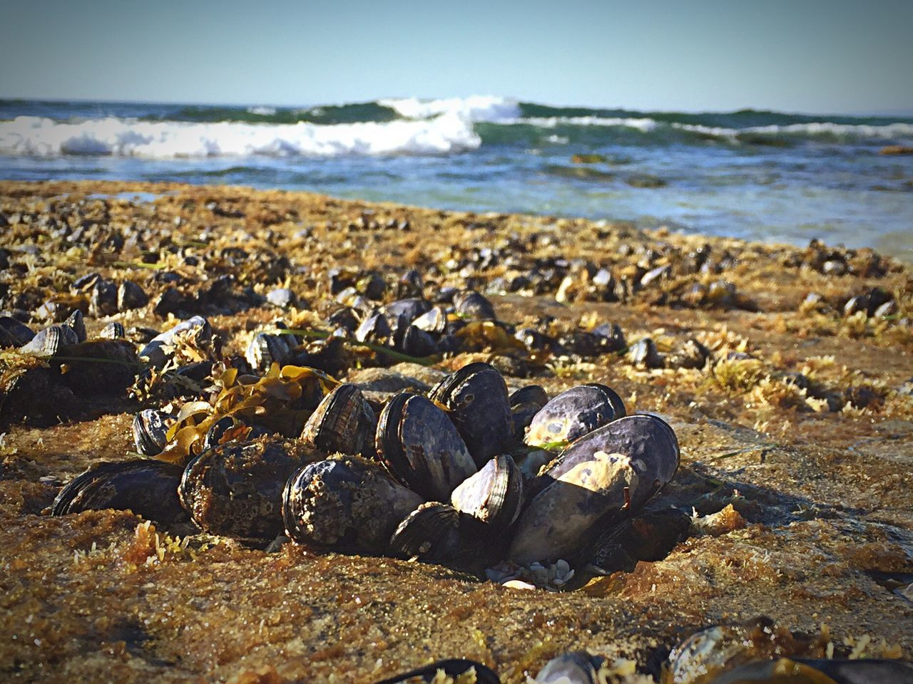 Mussels On Beach Against Sky