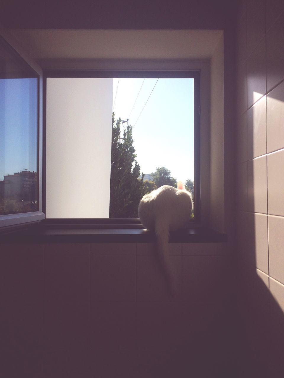 window, indoors, one animal, looking through window, day, full length, clear sky, standing, animal themes, real people, one person, mammal, nature, sky, people