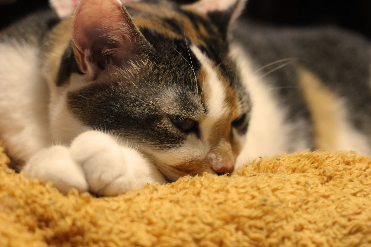 It's chilly tonight. CanonEoskissX7 Relaxing Cat Lovers My Cat ウチの姫様 Cat♡