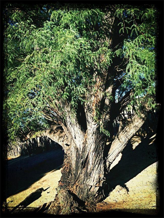 Trees Namwo13