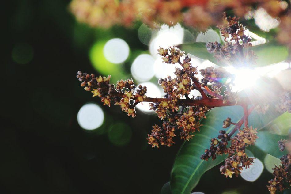 Taking Photos EyeEm Nature Lover Blooming Mango Shuttereffect Blurry Sunlight Throughleaves Canon 70d Lighteffect Clear