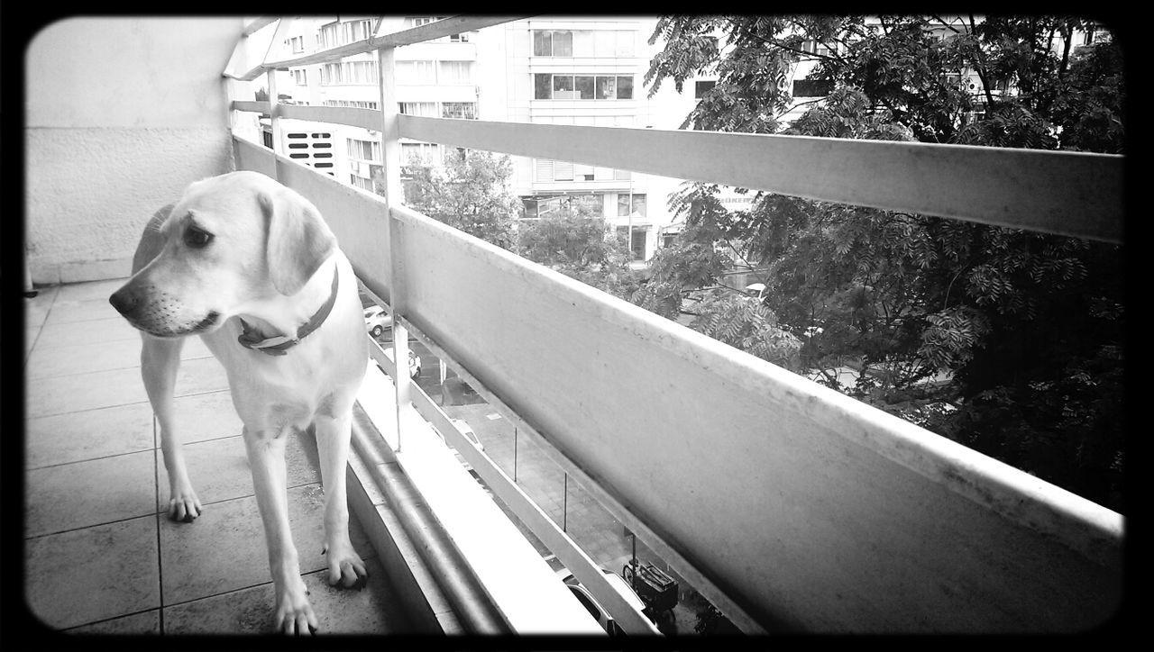 Dog Rain Day
