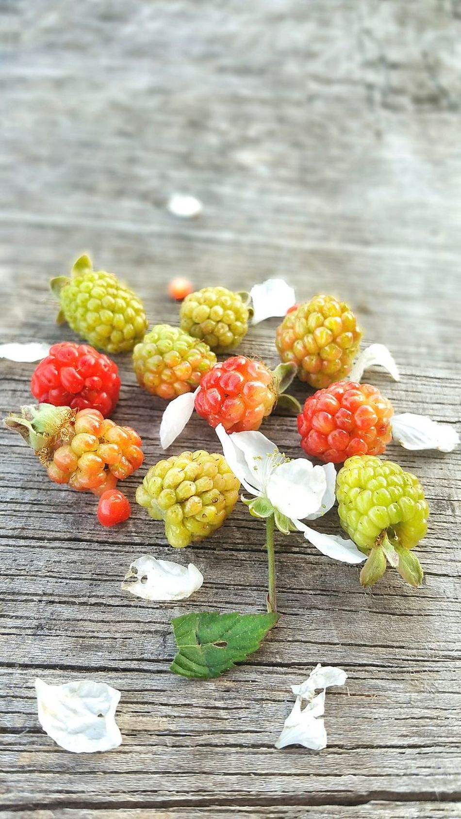 Healthy Eating Freshness No People Variation Fruit Food Food And Drink Close-up Multi Colored Outdoors Ready-to-eat Nature Day Wild Wild Berries Dew Berries Blackberry Wild Blackberries Group Bunch Unripe Weathered Wood Backgrounds Room For Text Room For Copy