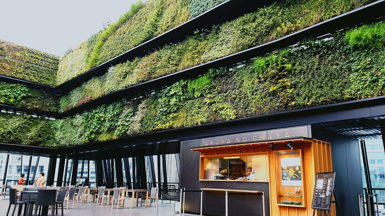 Green Color Tree Built Structure Greenhouse Architecture Tokyo Cafe Cafe Time Ginza Tokyo Japan Ginza Wall Outside Oasis Oasis In The City Busy Life Green Greenplants