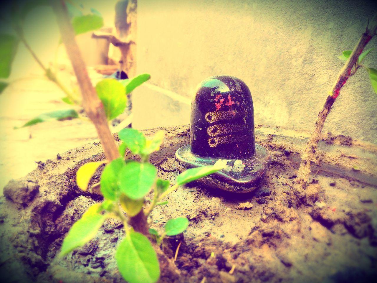 Shivling ShivLinga Lord Shiva Black Shivalinga Basil Plant Focus On Background