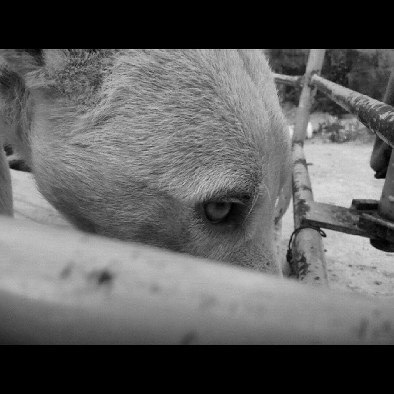 Pipo Picture Gallery Dog FotoDelDia Siguemeytesigo Instalike Instamoment Olvido Miradas Que Dicen Todo Dog FotoDelDia Instalike Animalista Perro Blanco y Negro Gallery Picture Folowme Like Tristeza miradavacía