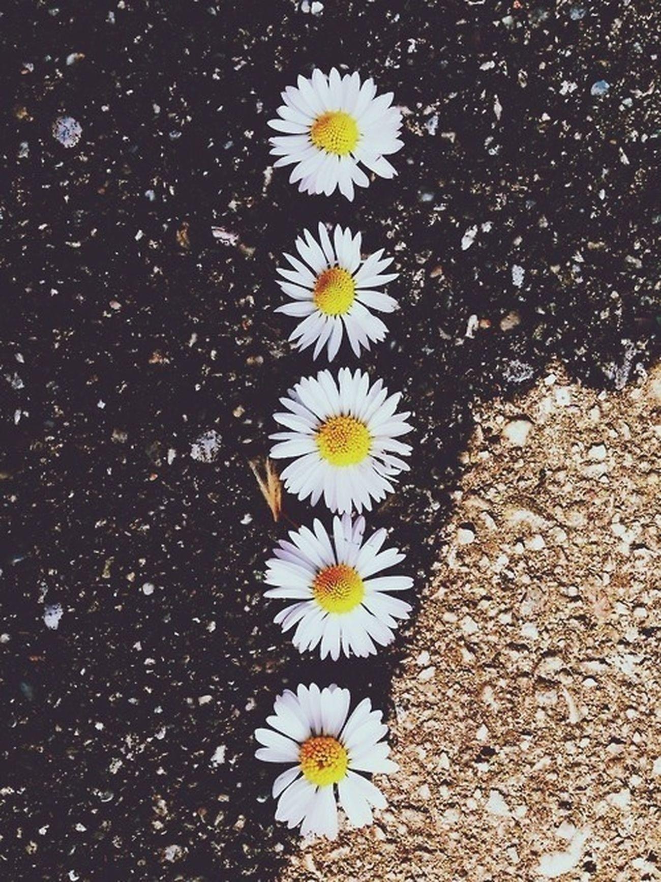 Flowers Soamazing