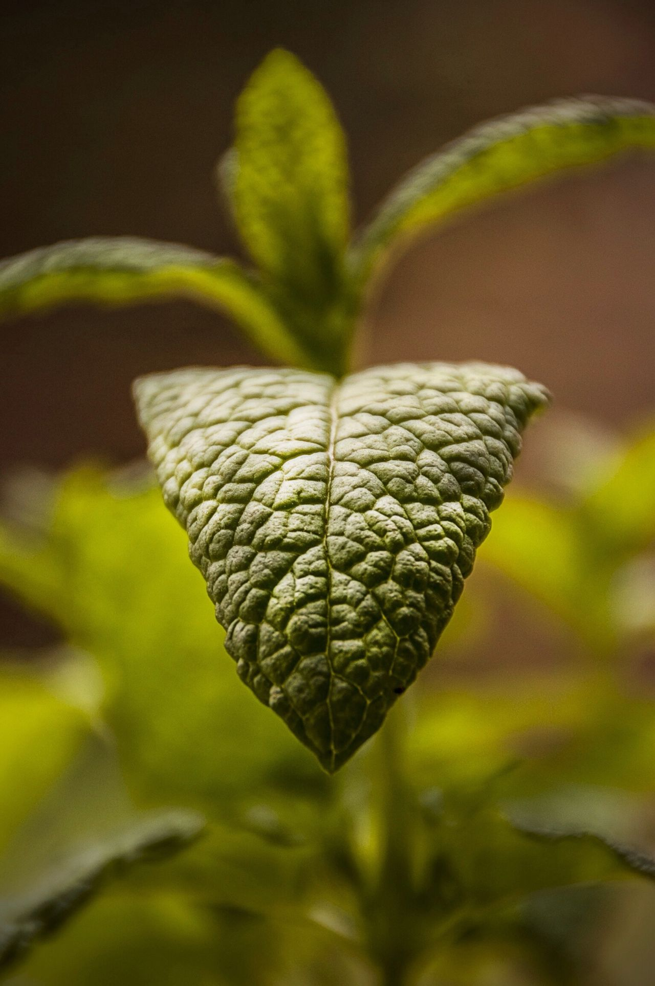 Beautiful stock photos of leaf, Day, Extreme Close-Up, Freshness, Growth