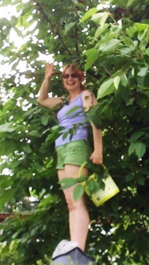 Kirschen Pflücken Kirschenzeit Cherry Tree Check This Out Hanging Out Hello World Cheese! Relaxing Hi! Enjoying Life Eyeemnature Eyeemnaturelover The Great Outdoors - 2016 EyeEm Awards EyeEm Gallery EyeEm Showcase June
