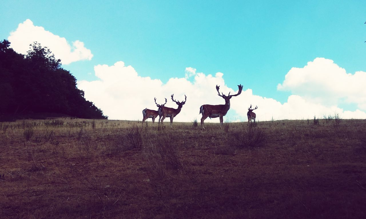 Animal Animals In The Wild Sky Deers Deers Nature Beauty Peace Animal Themes Cloud - Sky Outdoors Day No People Nature