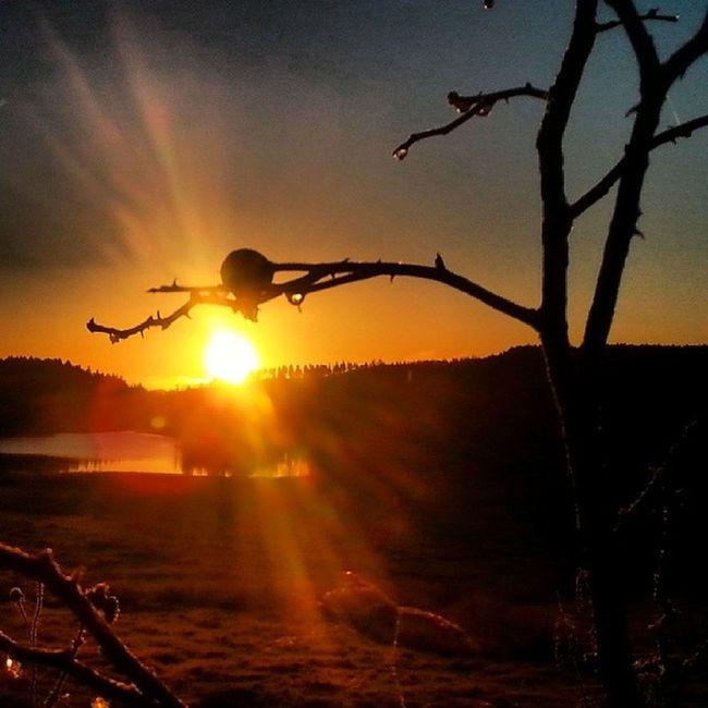 Yet another sunrise in Gobo Sweden Yxnerum  östergötland Sunrise morninglight earlymorning atumn atumnlight november gobo beautifulsweden ninacombat lake