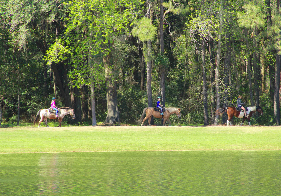 Beauty In Nature Green Color Horse Horseback Riding Leisure Activity Lifestyles Nature Outdoors Scenics Tranquil Scene Tranquility
