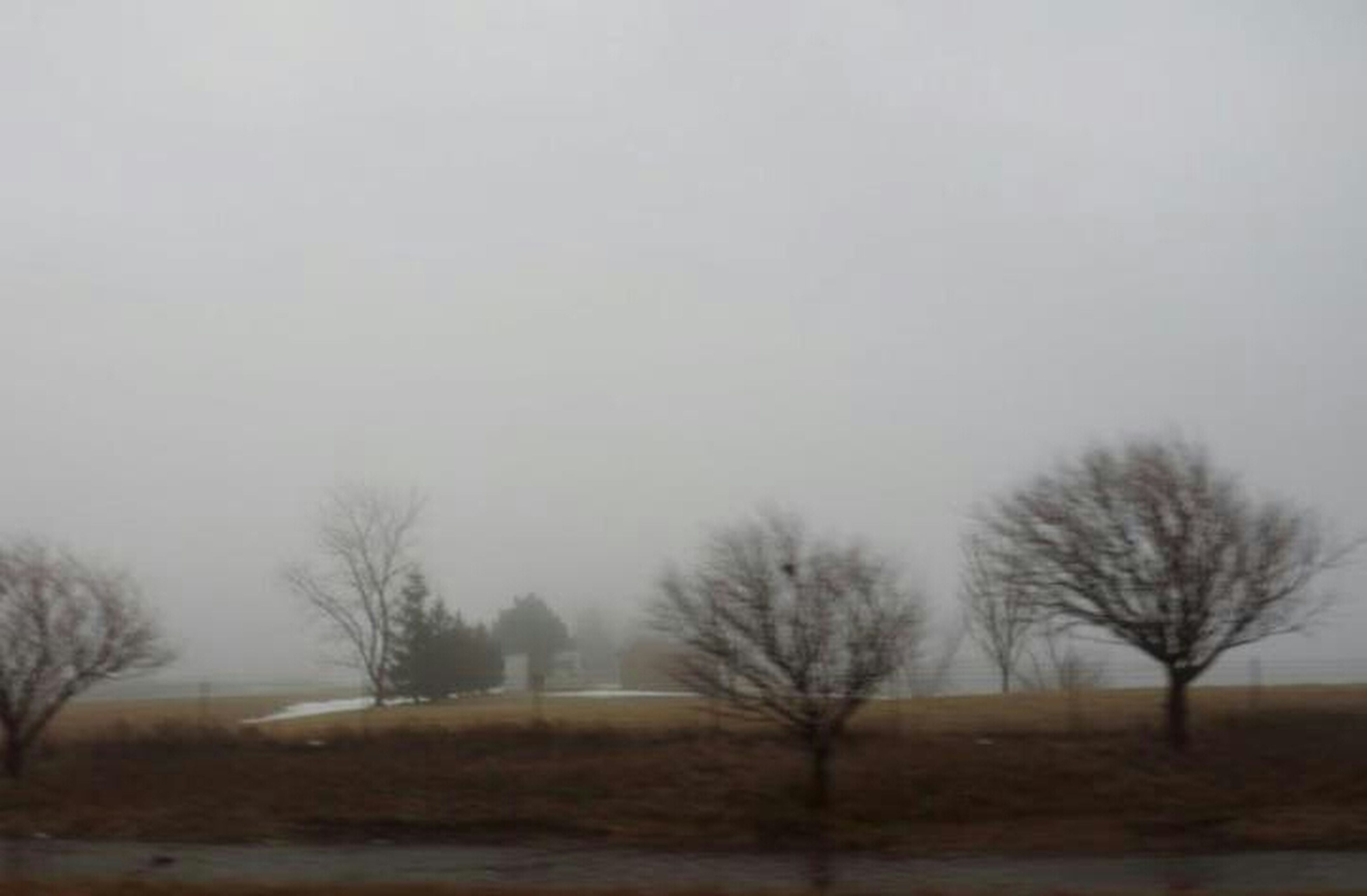 bare tree, tree, fog, foggy, landscape, tranquility, field, tranquil scene, copy space, weather, nature, scenics, beauty in nature, sky, branch, outdoors, dusk, non-urban scene, no people