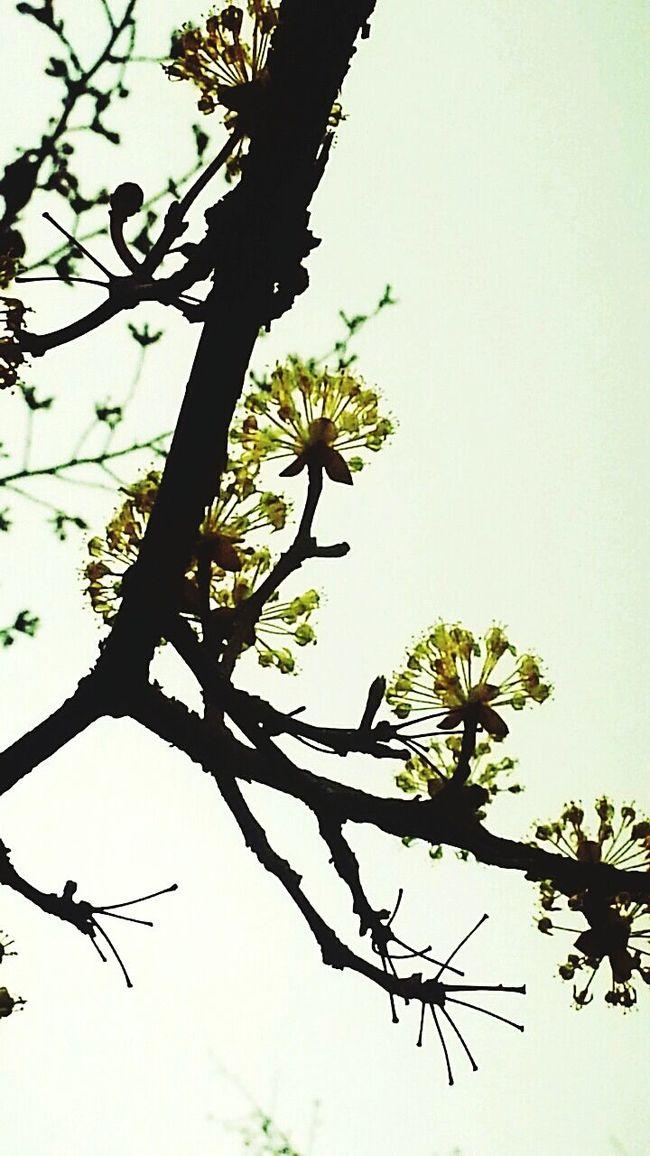 산수유 Sansuyu Flower Silhoutte Photography Small Flowers Flowerlovers Korean Wild Tree Flowerporn Take Photos Spring Flowers Year Springtime! Shadow And Light Flowers, Nature And Beauty